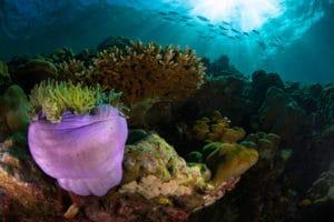Vie sous-marine
