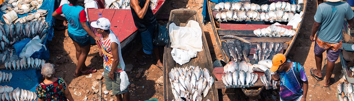 Small-scale fisheries in Manaus, Brésil