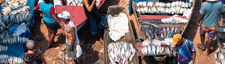 Petite pêche à Manaos, Brésil